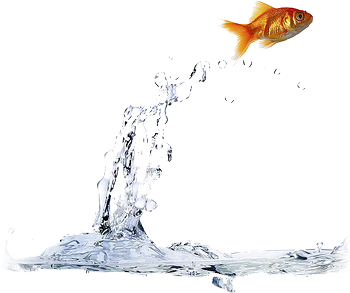 Source: fish jumping outta the water. is this out of the box thinking by ashish_sgh on Flickr.com